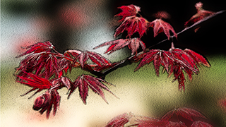 Church worship background Maple Painterly Background HD