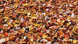 Autumn Carpet of Leaves Widescreen
