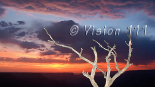 Grand Canyon Snag Sunset HD