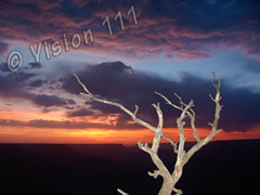 Grand Canyon Snag Sunset