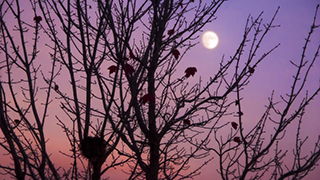 Nest in Fall with Evening Sky and Moon