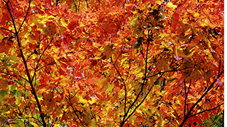 Autumn Leaves Pioneer Park Widescreen